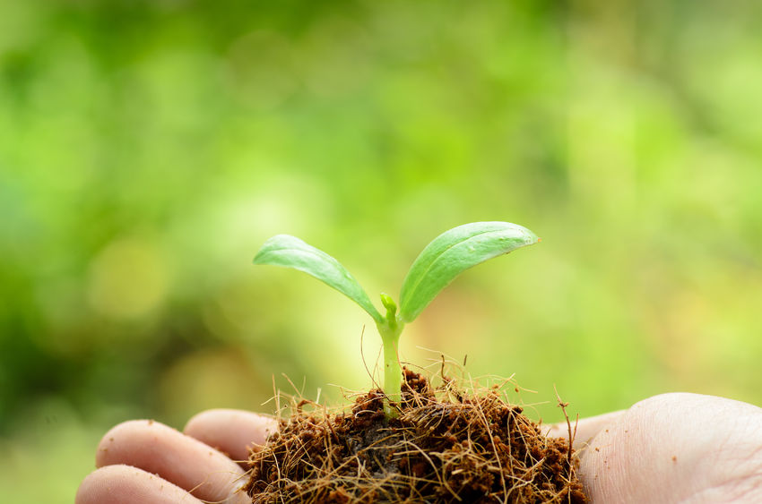 26023901 - young plant on male hand with organic soil pile over green and beginning to grow for people food and forest