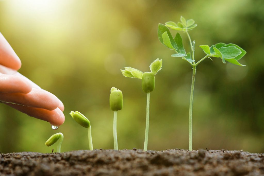 51059341 - hand nurturing and watering young baby plants growing in germination sequence on fertile soil with natural green background